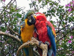5 Day Corto Maltes Amazonia Wildlife Holiday in Puerto Maldonado, Madre de Dios Region