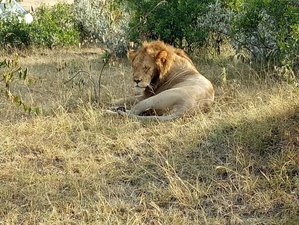 5 Days Wildebeest Migration Safari in Kenya