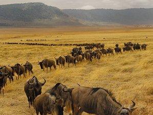 4 Days Family-Friendly Safari in the Enchanting Lake Manyara and Ngorongoro Crater, Tanzania
