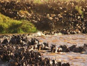 5 Days Wildebeest Migration and Big Five Safari in Tanzania