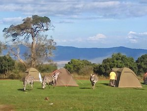 6 Days Exceptional Northern Safari - Camping