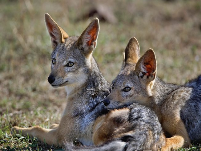 11 Days Best of Kenya Safari