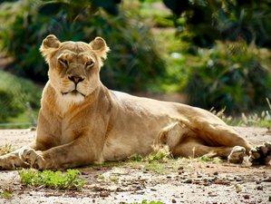 6 Days Manyara, Tarangire, Serengeti and Ngorongoro Safari in Tanzania