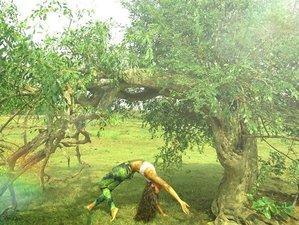 7 Days All Inclusive Meditation Forest and Yoga Holiday in Udawalawe Safari, Sri Lanka