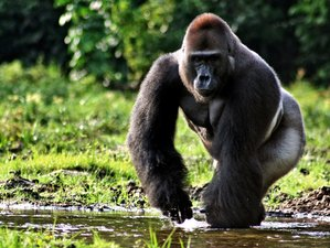 5 Days Gorilla Trekking and Wildlife Safari in Uganda