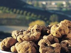 4 Days Truffle Experience in Langhe, Italy