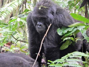 14 Days Luxury Uganda Safari and Gorilla Tracking