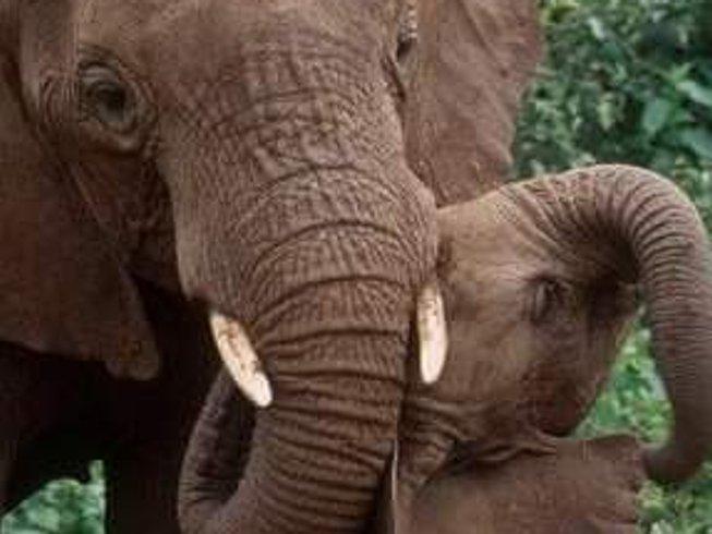 7 Days Wildlife Migration Safari in Kenya and Tanzania