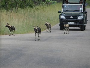 3 Days Classic Kruger Park Safari South Africa
