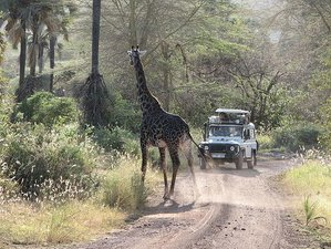 5 Days Best Lodge Safari in Tanzania Exploring Tarangire, Ngorongoro Crater, and Lake Manyara
