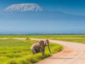 6 Days Masai Mara, Lake Nakuru, and Amboseli Joining Budget Wild Safari in Kenya
