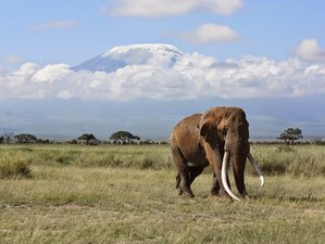 2 Days Magnificent Amboseli National Park Safari in Kenya