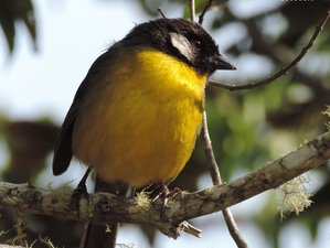 2 Day Popular Coffee Tour, Ecological Hiking, and Birdwatching Tour in Minca, Colombia