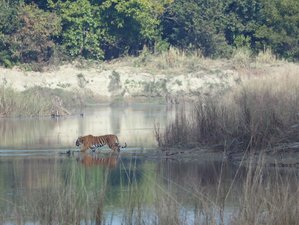 3 Day Quick Look of Bardia National Park Wildlife Tour in Bardiya