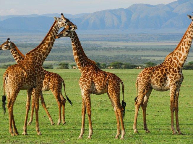 5 Days Extraordinary Budget Safari in Tanzania