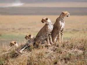 8 Days Best of Tanzania Authentic Camping Safari