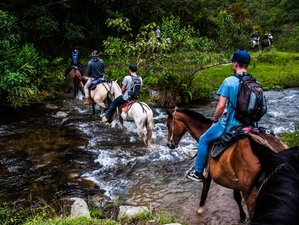 2 Day Coffee Farm Tour and Horse Riding Holiday in Salento, Colombia