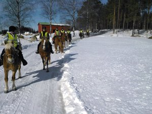 3 Day Snowy Horse Riding Holiday in Ikaalinen