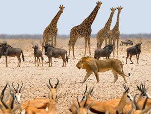 5 días en un increíble safari de acampada en el Serengueti y el cráter de Ngorongoro, Tanzania