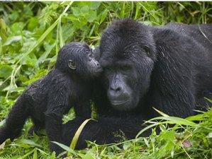 2 Days Gorilla Trekking Safari from Rwanda to Uganda