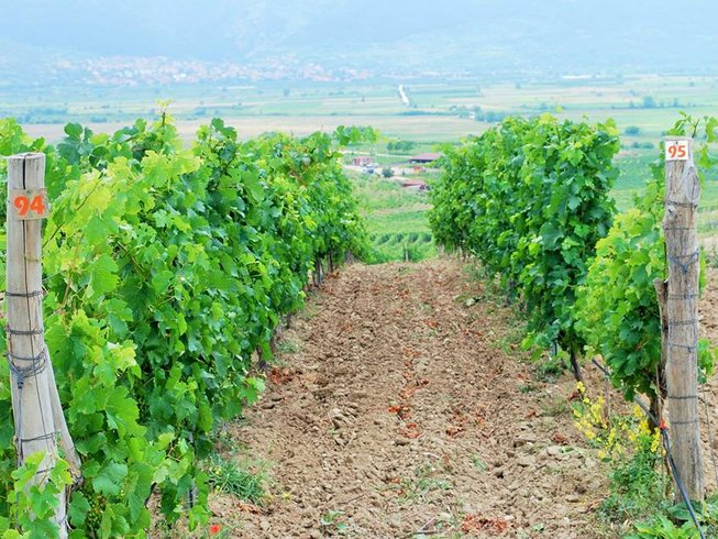 6 Days Wine and Culinary Holidays in Melnik, Bulgaria