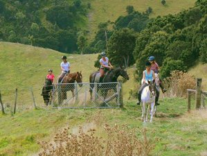 3 Days Equestrian Holiday with Dressage and Jumping Lessons in Upper Hutt, New Zealand
