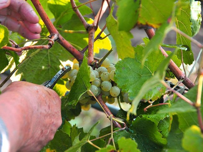 6 Days Wine Tour & Spa Holiday in Eastern Thrace