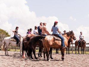 8 Days Beginner Horse Riding Holiday in La Salvetat sur Agout, France