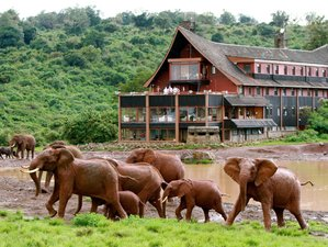 5 Days Wildlife Safari in Sweetwaters, Lake Nakuru, and Masai Mara in Kenya
