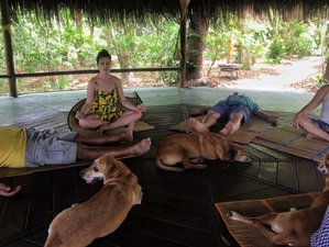8 Days Nature & Yoga Holiday with Healing Dogs, Brazil