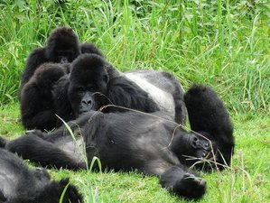 6 Days Mountain Gorilla and Chimpanzee Tracking Safari in Rwanda