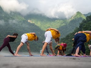 24 Days 200-Hours All in One Vinyasa & Hatha Yoga Teacher Training in Rishikesh, India