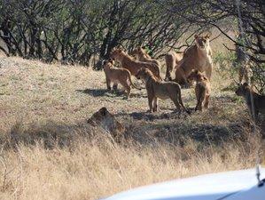 6-Daagse Hwange National Park en Victoria Falls Safari in Zimbabwe