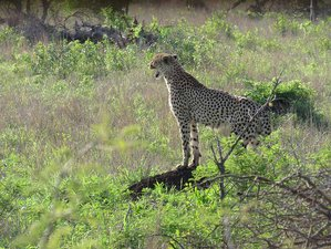 4 Days Big Five Safari in South Africa