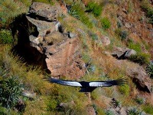 12 Day Cultural Safari in Peru