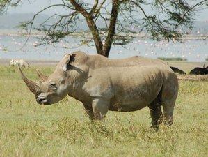 3 Days Dream Wildlife Kenya Safari