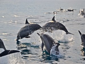 3 Day Dolphin Watching Safari in Lovina, Bali
