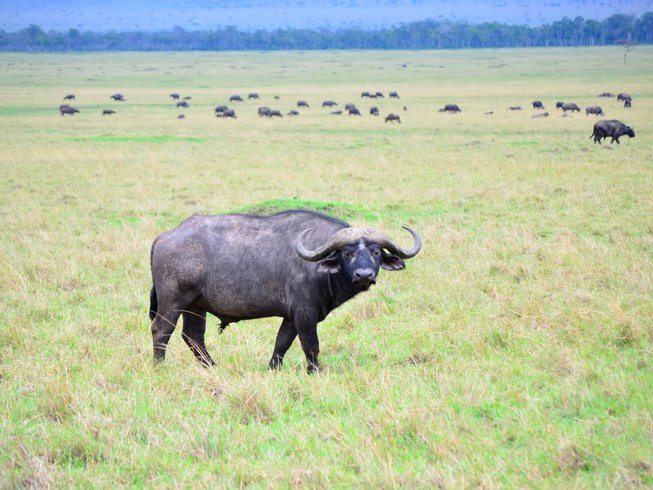 3 Days Maasai Mara Safaris in Kenya