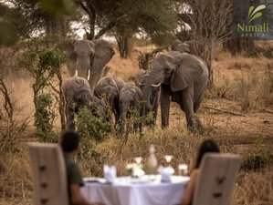 9 Days Wildlife Safari Tour in Tanzania