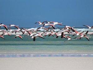 10 Days Karibu Special Kenya Safari