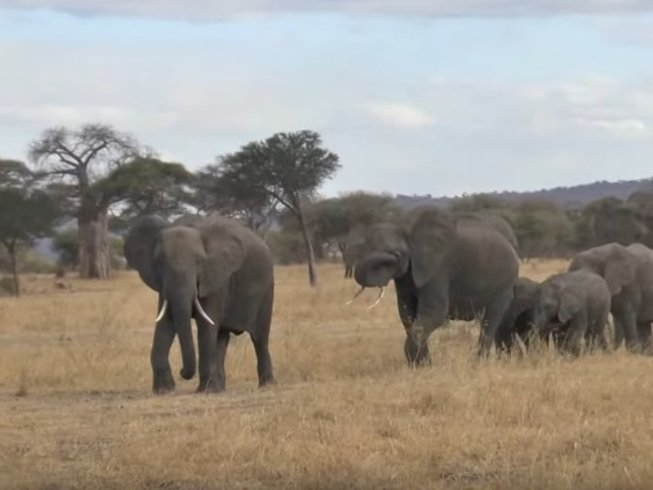 4 Days Photographic Migration Safari in Tanzania