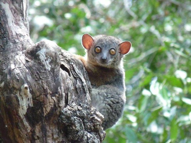 14 Days Wildlife Safari in Madagascar