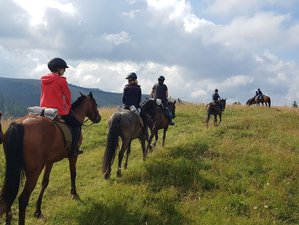 2 Days Horseback Riding Holiday in Transylvania, Romania