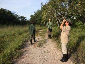 4 Days Incredible Bat Safari in Zambia