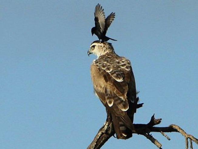4 Days Kruger National Park Tours and Budget Safari