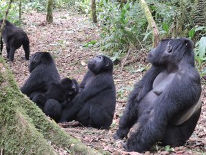 4 Days Gorilla Tracking Safari in Northern Province, Rwanda