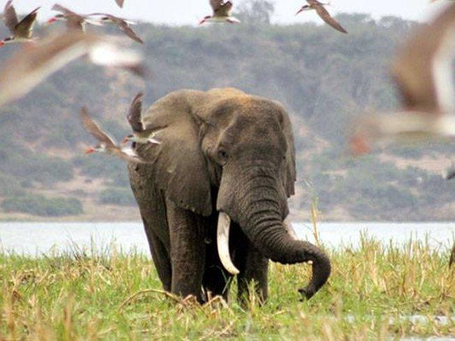 4 Days Gorilla Trekking Safari in Uganda