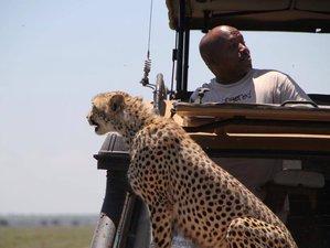 3 Days Highlights of Breathtaking Northern Tanzania Lodge Safari