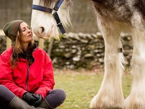4 Day Pure Horse Connection with Yoga and Meditation in East Sussex, England