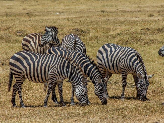 6 Days Machame Route Kilimanjaro Safari and Trekking